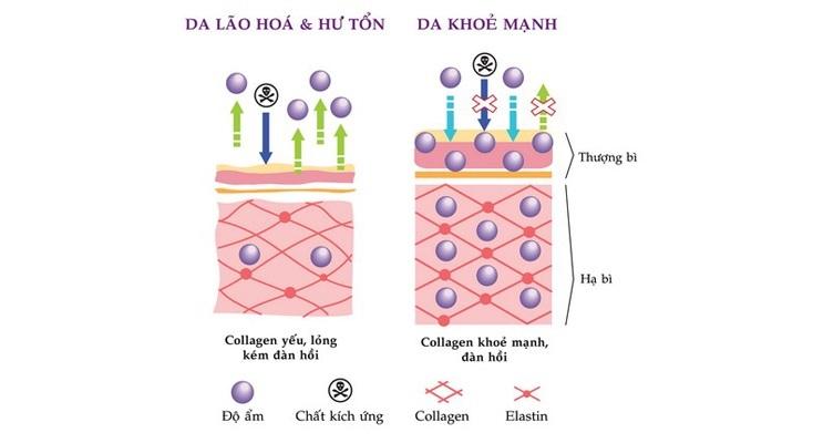 co-hap-thu-collagen-duoi-dang-nao-la-tot-nhat