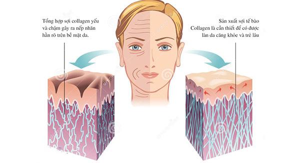 san-sinh-collagen
