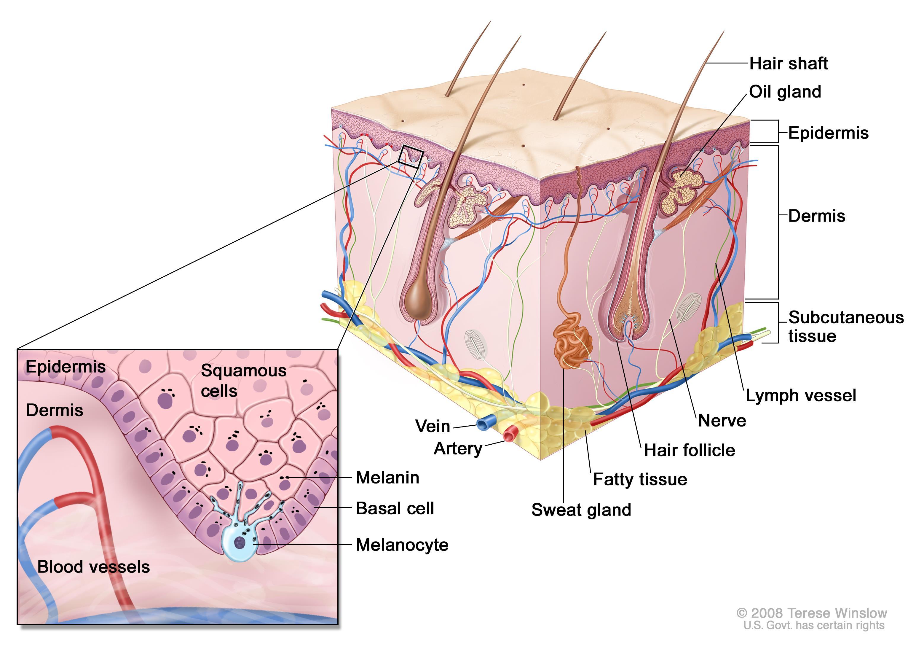 cau-truc-da-co-the-phuc-hoi-khong-skin-care-treatment-paragon-clinic